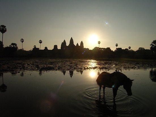 cambodia-notice01
