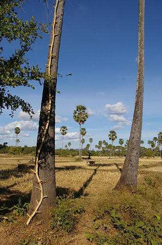cambodia2013sake18