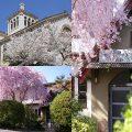 春到来…♡京都の桜・王道&穴場のご案内まとめ