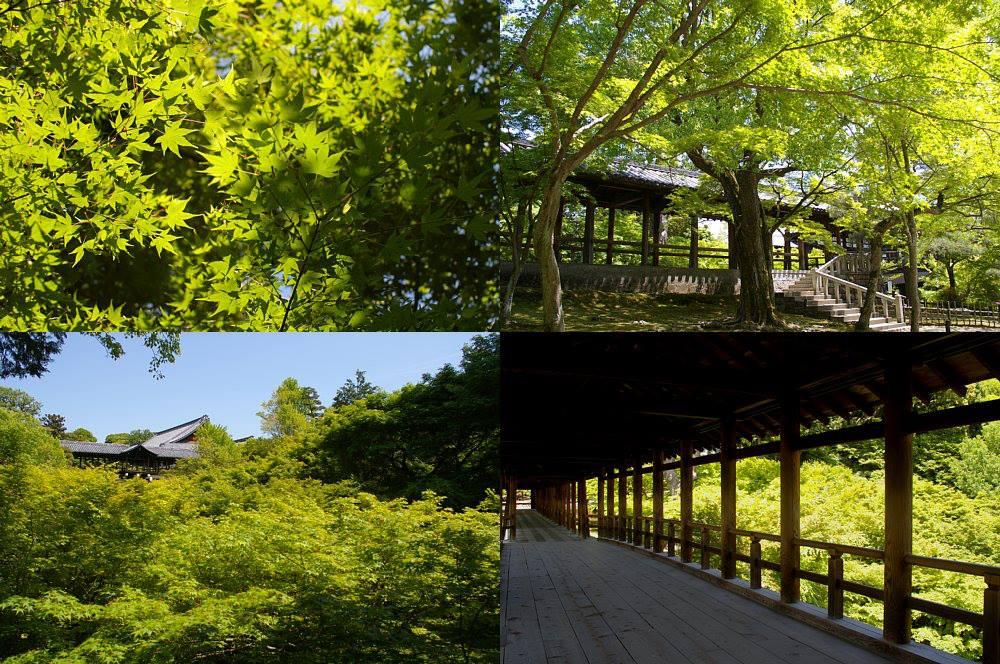 Momijikyoto