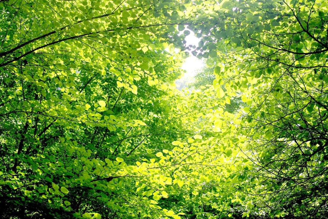 Teshirosawa00001
