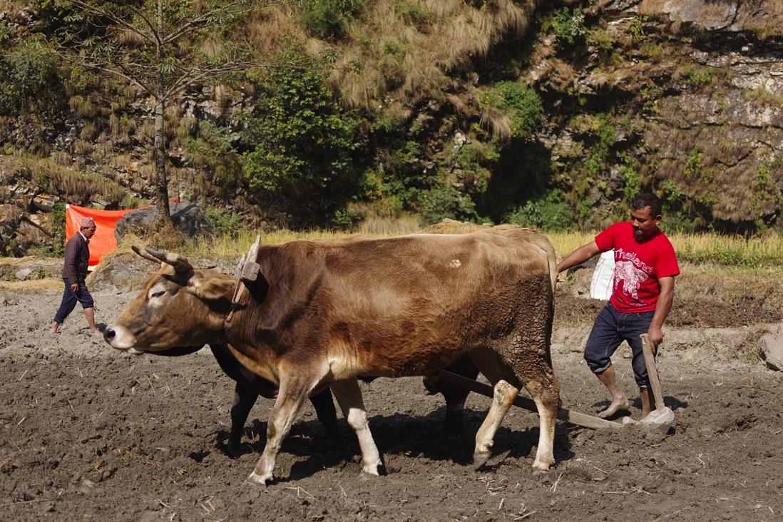 Nepal201800087