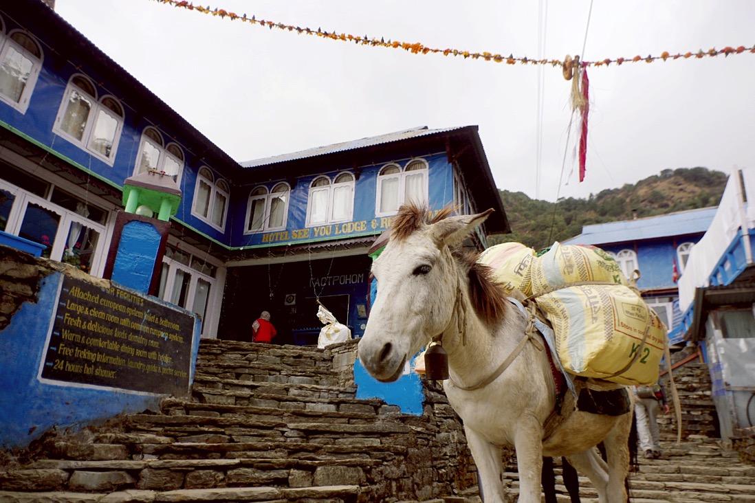 Nepal201800161