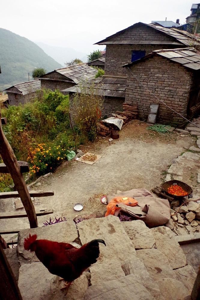 Nepal201800178