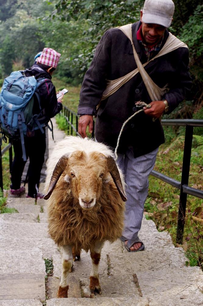 Nepal201800272