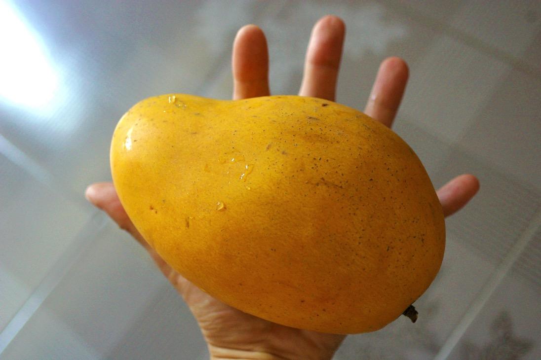 Cambodiamango00003